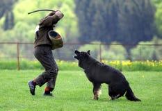 psi sportu Obrazy Royalty Free