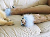 psi stopy łapy kobiety obrazy royalty free
