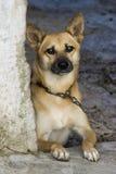 psi strażnik fotografia royalty free