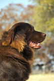 psi strzeżenie jego jard Zdjęcie Royalty Free