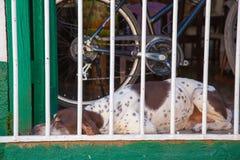 psi sypialny pobliski rower w zwrotnika kraju obrazy royalty free