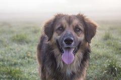 psi szczęśliwy Fotografia Royalty Free