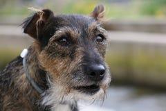 psi szczęśliwy Obraz Royalty Free