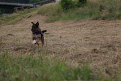 psi szczęśliwy Obraz Stock