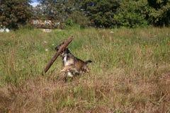 psi szczęśliwy Fotografia Stock