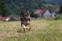 psi szczęśliwy Zdjęcie Royalty Free