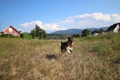 psi szczęśliwy Zdjęcia Stock