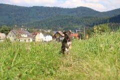 psi szczęśliwy Zdjęcie Stock