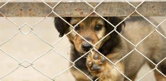 Psi szczeniaka sztandar zdjęcia royalty free