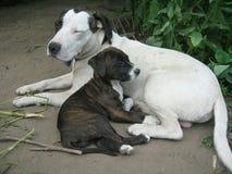 Psi szczeniaki Obraz Royalty Free