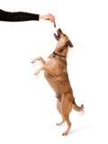 psi szkolenie Zdjęcie Royalty Free