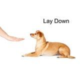 Psi szkolenie Kłaść puszek Zdjęcia Stock