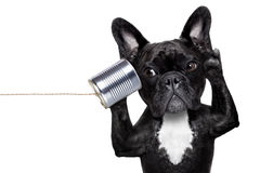 Psi telefonu telpehone zdjęcia royalty free