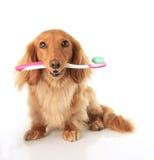 Psi toothbrush Zdjęcie Stock