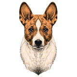 Psi trakenu Basenji głowy nakreślenia wektor royalty ilustracja