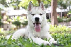 Psi uśmiech Zdjęcie Royalty Free
