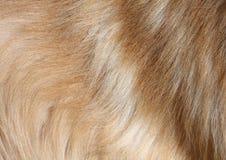 psi włosy Obraz Royalty Free