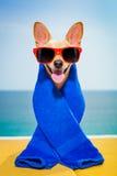 Psi wellness zdrój Obrazy Royalty Free