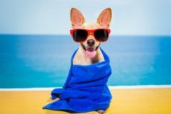 Psi wellness zdrój Fotografia Royalty Free