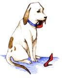 psi winny Obrazy Stock