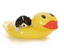 Psi wodny bezpieczeństwo fotografia stock