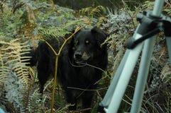 Psi wycieczkować w górze Obraz Stock