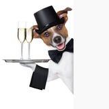 Psi wznosić toast Obraz Royalty Free