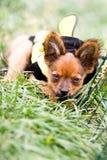 psi ziele Obrazy Royalty Free