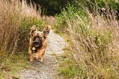 Psi zwierzę domowe bieg podczas gdy ono uśmiecha się w trawiastym krajobrazie obrazy royalty free