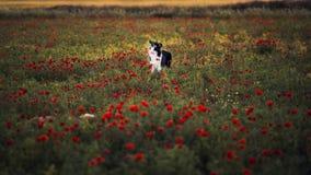 Psi zwierzę domowe w fieldog zwierzęciu domowym w polu Obraz Stock