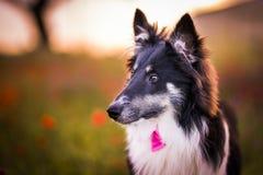 Psi zwierzę domowe Obraz Royalty Free