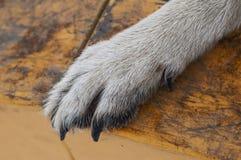 Psia łapa obrazy royalty free