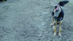 Psia łasowanie kość przy zimą zbiory wideo