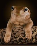 Psia żaba Zdjęcia Royalty Free