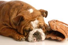 psia baseball rękawiczka Obraz Royalty Free