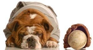 psia baseball rękawiczka Obrazy Royalty Free