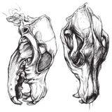 Psia czaszka ilustracja wektor