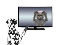 Psia dopatrywanie telewizja Obrazy Royalty Free