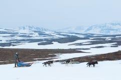 Psia drużyna na zimy tundrze Zdjęcia Royalty Free