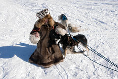 psia dziewczyno Zdjęcia Royalty Free