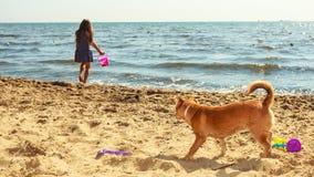 psia dziewczyno jej grać Obrazy Royalty Free