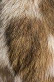 Psia Futerkowa tekstura Zdjęcia Stock