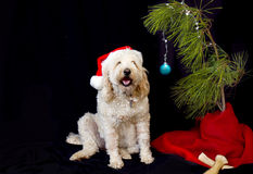 Psia i gałązka choinka Fotografia Stock