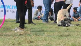 Psia kochanek odświętność & cieszyć się zwierzę domowe Karmiliśmy jarmark zdjęcie wideo