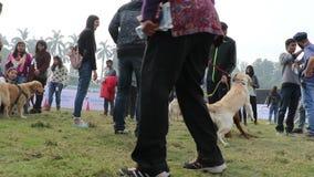 Psia kochanek odświętność & cieszyć się zwierzę domowe Karmiliśmy jarmark zbiory wideo