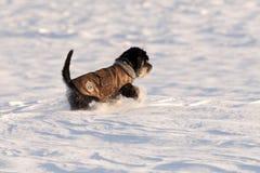 Psia kurtka Obrazy Royalty Free