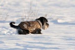 Psia kurtka Zdjęcia Stock
