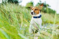 Psia lato plaża Fotografia Stock