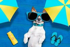 Psia lato plaża Zdjęcia Stock