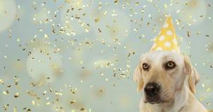 PSIA odświętność przyjęcie urodzinowe, JEST UBRANYM ŻÓŁTEGO polki kropki kapelusz ODIZOLOWYWAJĄCY PRZECIW PASTELOWEMU B obraz royalty free